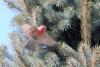 smallredbird.jpg